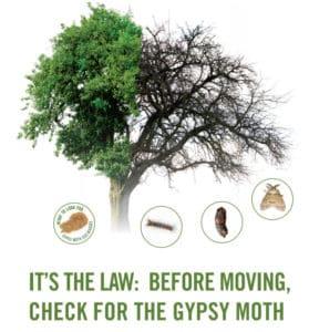 Gypsy Moth Checklist